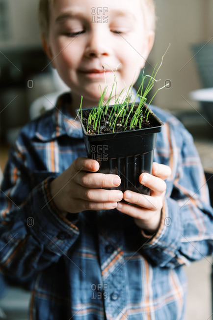 Little boy growing little leeks for the season.
