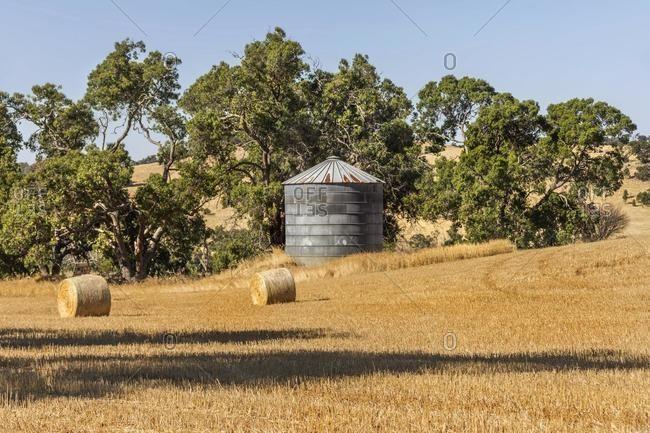 Hay bales in a field, Western Australia, Australia