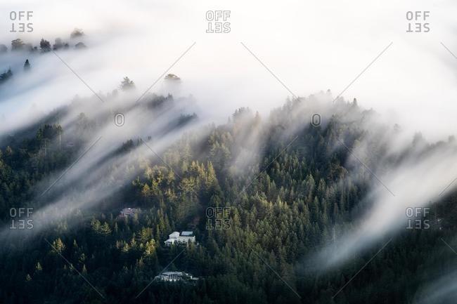 Fog over the forest, Mount Tamalpais, Marin County, California, USA