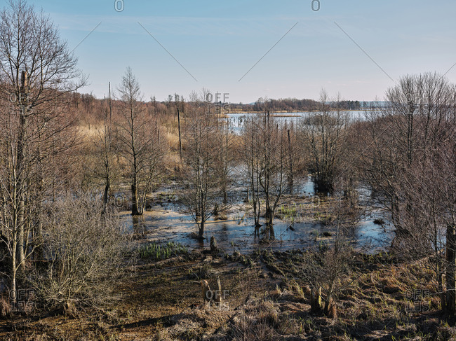 Swamp in rural Sweden