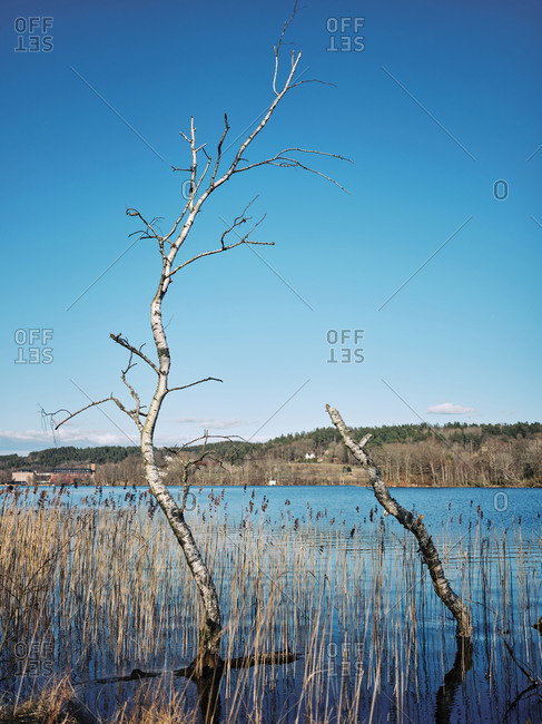 Bare trees sticking up out of a swamp