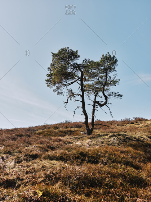 Tree on a hillside in rural Sweden