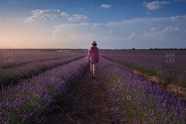 Female farmer walking along ground among rows of lavender flowers in field in sunny day