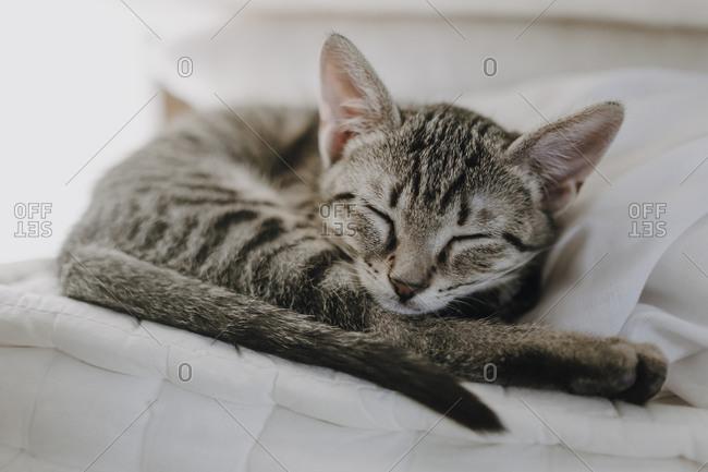 Cute kitten lying on blanket
