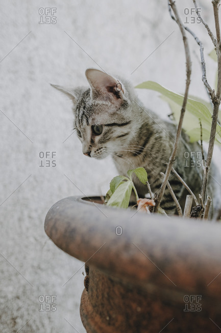 Funny kitty standing on potted plants