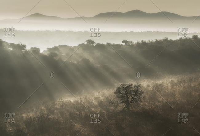 Rays of bright sun illuminating grassy hills in foggy morning in nature