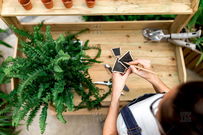 Top view of anonymous woman making notes on labels while standing near wooden table with potted plant in indoor garden