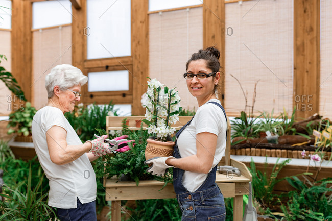 Woman looking at camera and carrying potted flower while mature lady cutting plant leaves during work in wooden hothouse
