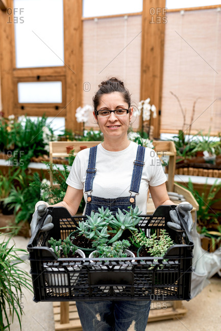 Adult happy woman smiling looking at camera and carrying plastic box with succulents while working in wooden greenhouse