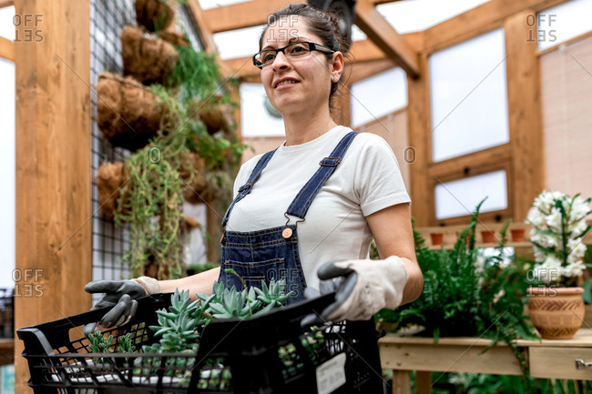Adult happy woman smiling looking away and carrying plastic box with succulents while working in wooden greenhouse