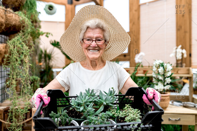 Positive elderly woman in hat and glasses carrying plastic box with potted succulents and smiling for camera while working in hothouse