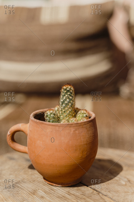 Morocco- Small cactus planted in clay mug