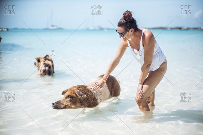 Woman petting pig- swimming in sea on Pig Beach- Exuma- Bahamas- Caribbean