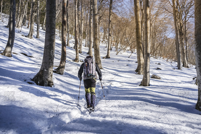 Back view of man hiking in snow-covered forest- Orobie Alps- Lecco- Italy