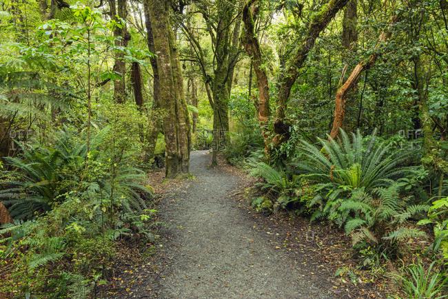 New Zealand- Otago- Forest footpath leading to Purakaunui Falls