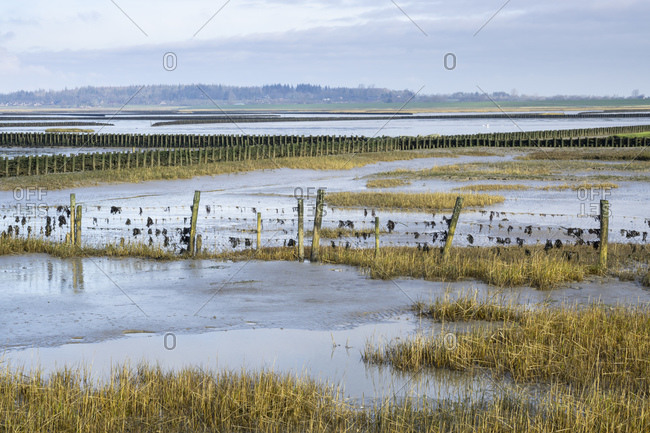 Germany- Schleswig-Holstein- Fenced salt marsh in Wadden Sea National Parks during low tide