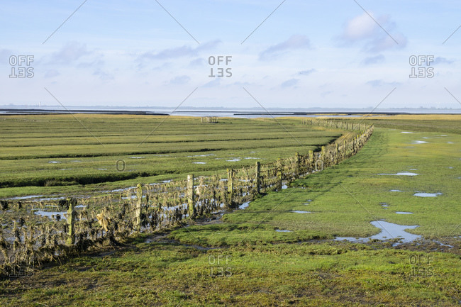 Germany- Schleswig-Holstein- Fenced salt marsh in Wadden Sea National Parks