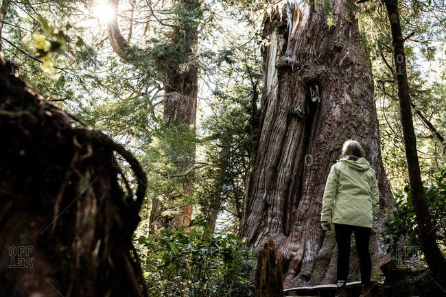 Woman looking up at a large old tree