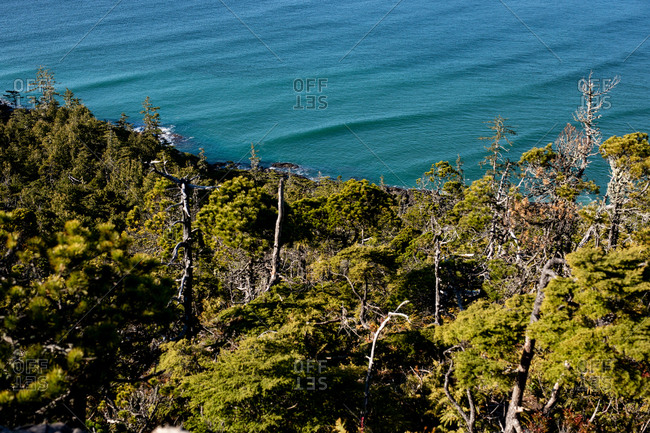 Bird's eye view of lush green forest boarding blue water