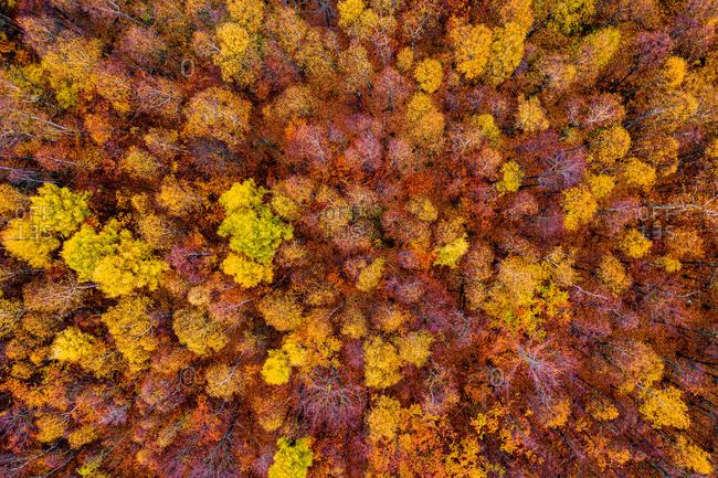 Aerial view of deciduous European forest in autumn, Tisa, Czech Republic.