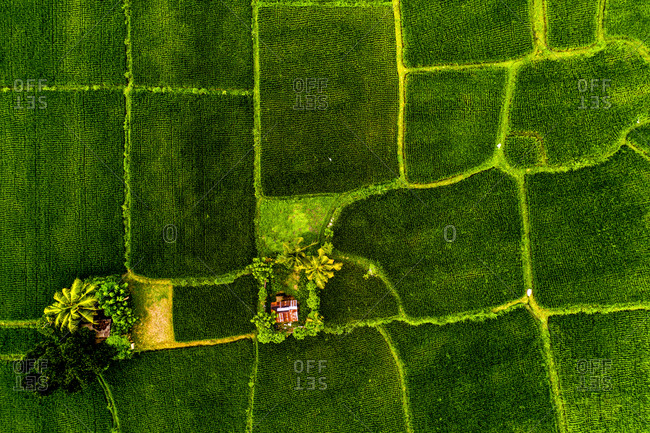 Aerial view of the traditional rice fields at Mas, Bali, Indonesia.