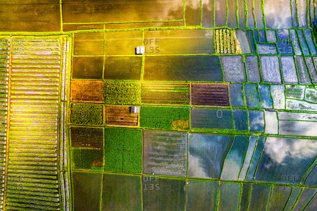 Aerial view of the traditional agriculture at Penarungan, Bali, Indonesia.