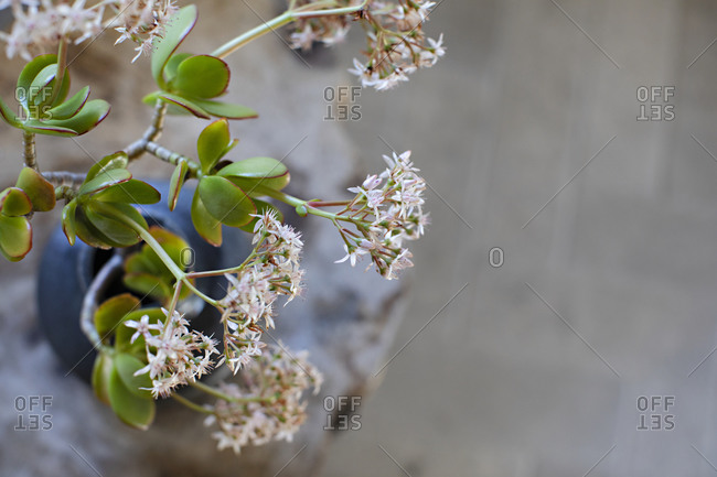 Close up of small flower blossoms on a branch in a vase with copy space