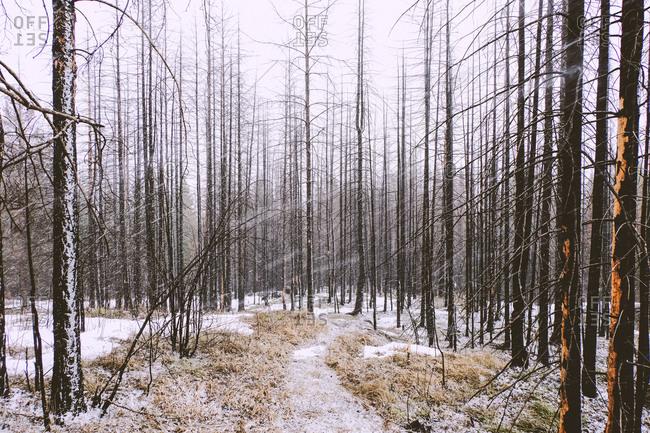 Forest in winter, Ural, Sverdlovsk, Russia