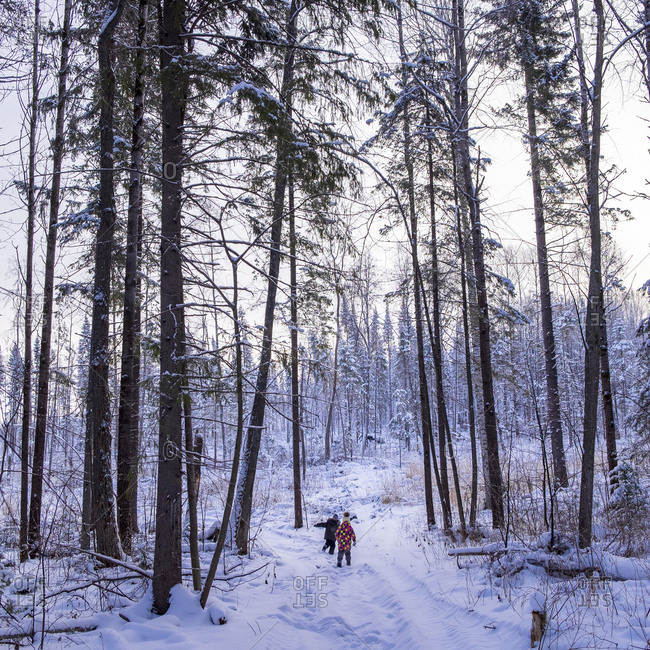 Boy and girl walking through snow covered forest, rear view