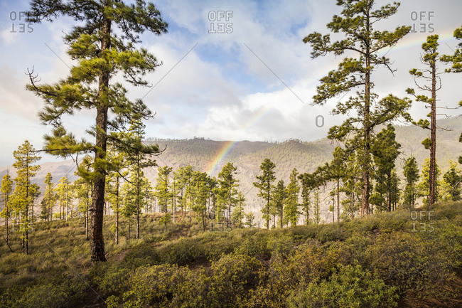 Rainbow over forest landscape, Mogen, Canary Islands, Spain