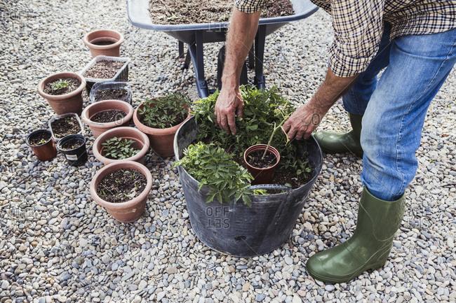 Man taking care of his vegetable garden