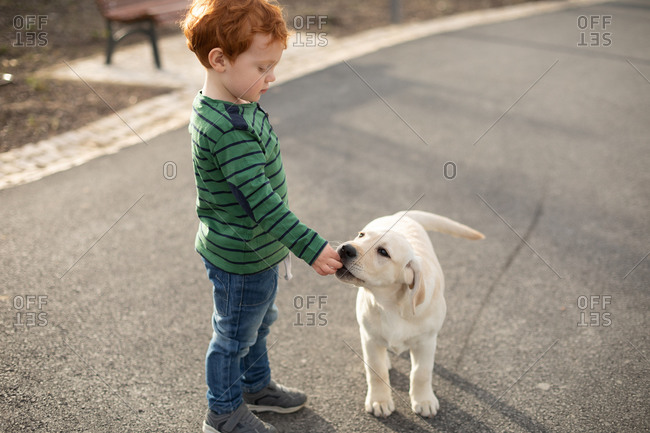Boy giving pet puppy training treat