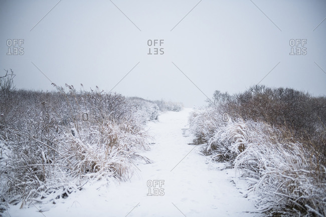 Beach path covered in winter snow