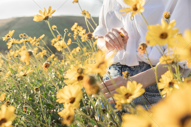Woman holding flower in yellow flower field in ad