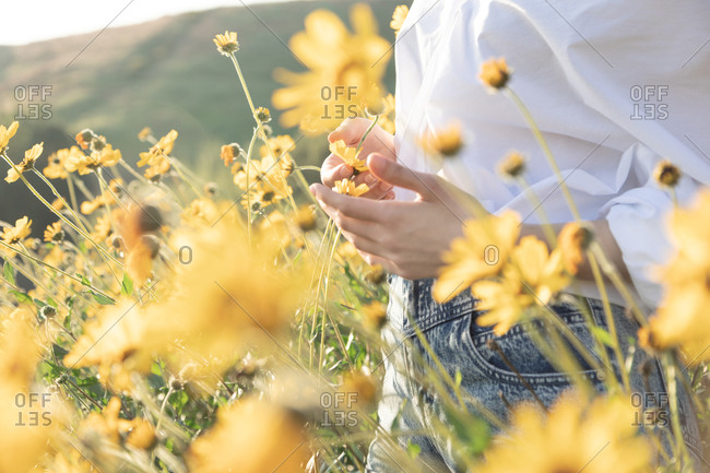 Woman\'s hands holding yellow flower in field in afternoon light