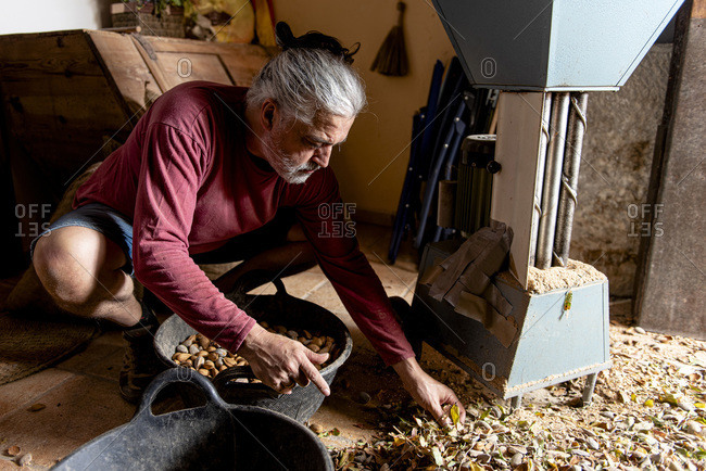 Male farmer checking his almond harvest after doing its harvest