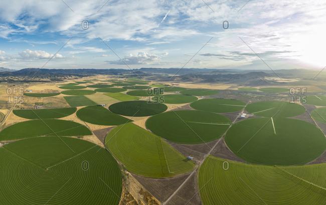 Green Crop Circles Grow in a Remove Nevada Desert