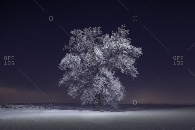 Frozen Trees and Snowy Winter Scene in Rural Pennsylvania