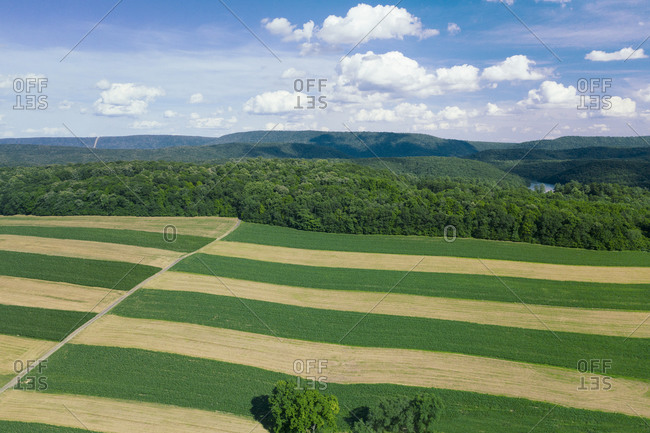 PA Farmland harvested in stripe pattern aerial