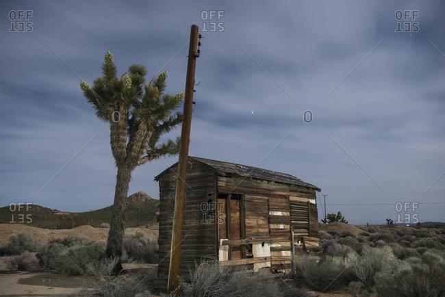 Abandoned Shack and Joshua Tree in Desert