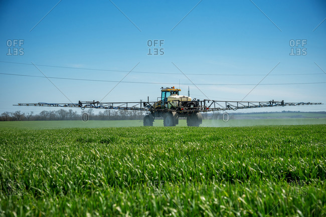 Tractor spraying wheat field at summer.