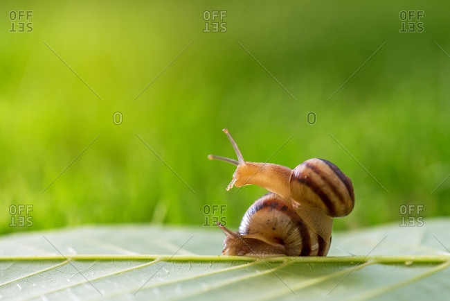Two snails on the grass.