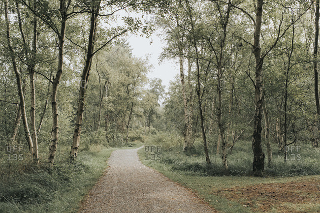 Netherlands- Schiermonnikoog- path through the forest