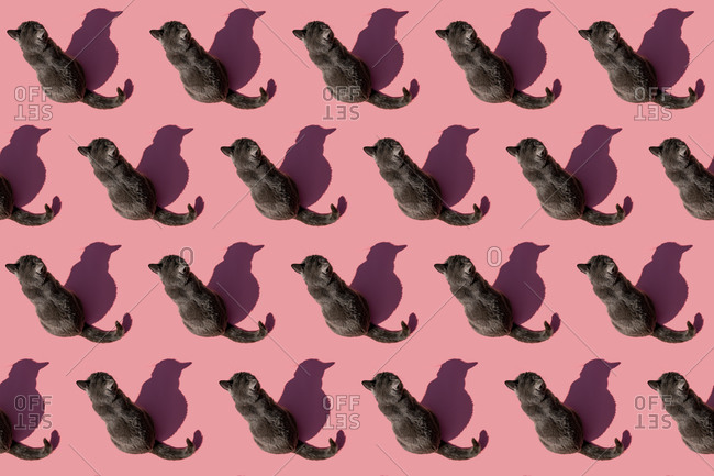 Pattern of Russian Blue cat sitting against pink background