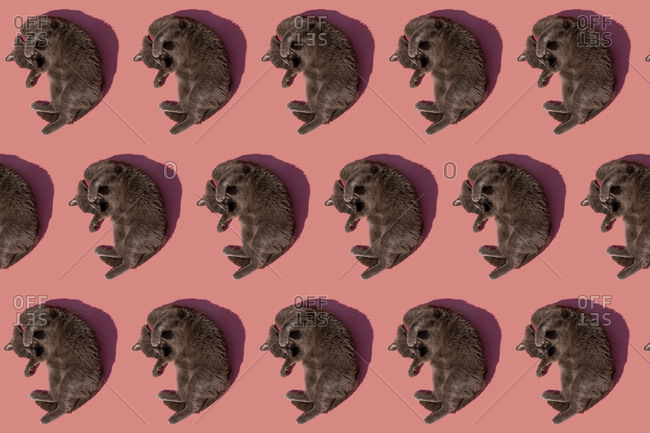 Pattern of Russian Blue cat lying against pink background