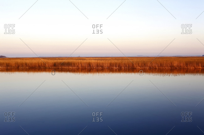 Germany- Mecklenburg-Western Pomerania- Zingst- Clear sky over grassy coastline of Baltic Sea at dusk