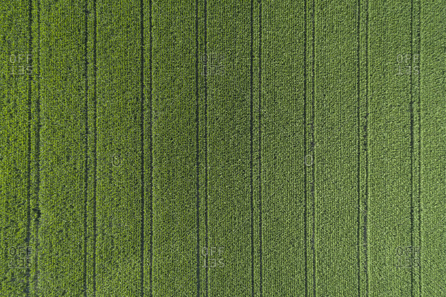 Germany- Bavaria- Drone view of vast green corn field in summer