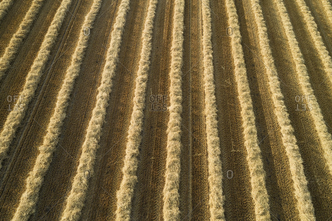 Germany- Bavaria- Drone view of rows of mowed straw