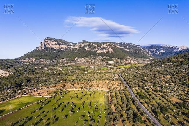 Spain- Balearic Islands- Valldemossa- Drone view of summertime olive tree orchard in Serra de Tramuntana