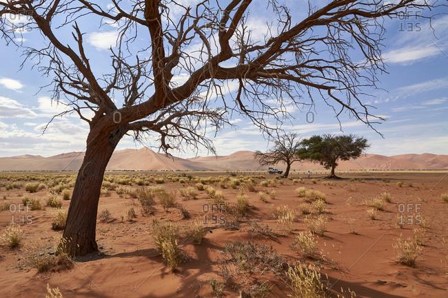 Namibia- Bare tree in Namib Desert